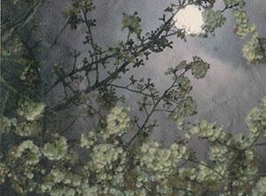 Cécile Wick, Mond 3 Detail